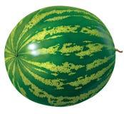 vattenmelon stock illustrationer
