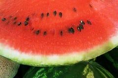 Vattenmelon (1) Fotografering för Bildbyråer