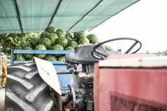 Vattenmelon i släpet arkivfoton