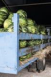 Vattenmelon i släpet royaltyfri bild