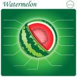 Vattenmelon Infogram Arkivfoto