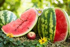 Vattenmelon och bi Royaltyfria Foton