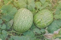Vattenmelon och ett pumpakors Arkivfoto