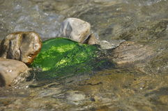 Vattenmelon som kylas i floden Royaltyfri Foto