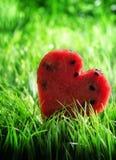 Vattenmelonhjärta på grönt gräs begreppshjärta över rose valentinwhite för red Royaltyfri Bild