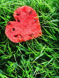 Vattenmelonhjärta på grönt gräs begreppshjärta över rose valentinwhite för red Royaltyfria Foton