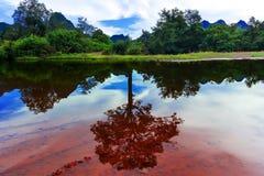 Vattenminne eller tillbaka minnen om träd. Royaltyfria Foton
