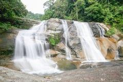 Vattennedgång i den sydliga rainforesten Arkivfoton