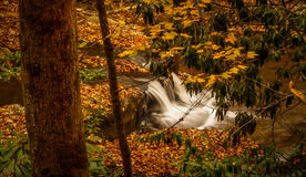 Vattennedgång i en skog arkivbild