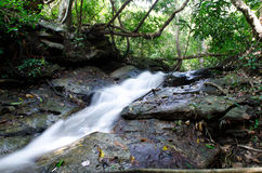 Vattennedgång i tät och ogenomtränglig skog Arkivbild
