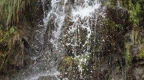 Vattenrapta Arkivfoton