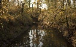 Vattenreflexion, stillhet och fred, säkerhet, meditation, zentillstånd av meningen arkivbild