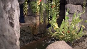 Vattensärdrag i trädgårdspringbrunn stock video