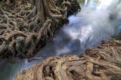 Vattenskogen rotar vattenfallträdet Fotografering för Bildbyråer