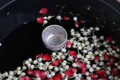 Vattenskopa med jasmin på vattnet Royaltyfria Bilder