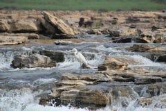 Vattenslaglängd royaltyfri fotografi