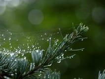Vattensmå droppar inställda i spindelrengöringsduk efter regndusch arkivbilder