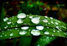 Vattensmå droppar på en växt Royaltyfri Fotografi