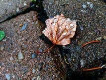 Vattensmå droppar på ett torkat blad under våren arkivfoto