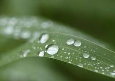 Vattensmå droppar på gräsbladet - makro Royaltyfria Foton