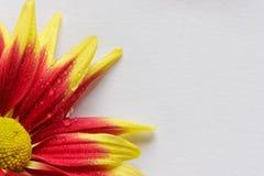 Vattensmå droppar på kronbladen av blommor Fotografering för Bildbyråer