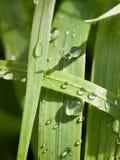 Vattensmå droppar på sidorna i skogmakroen Royaltyfria Bilder