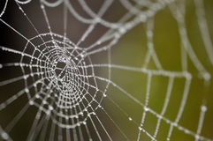 Vattensmå droppar på spindels rengöringsduk Royaltyfria Bilder