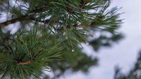 Vattensmå droppar sörjer på trädet Royaltyfri Foto