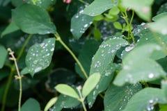 Vattensmå droppar som av faller blad Arkivbilder