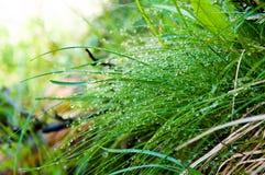 Vattensmå droppar på gräs Fotografering för Bildbyråer