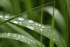 Vattensmå droppar på gräsbladet - makro Royaltyfri Bild