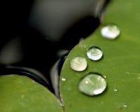 Vattensmå droppar på Lily Pad Arkivbild