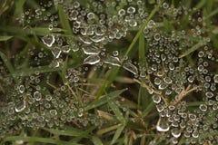 Vattensmå droppar på spindelrengöringsduk Royaltyfri Foto