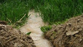 Vattensorl in i jordbruksmark lager videofilmer