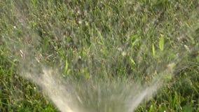 Vattensprejer från att bevattna spridaren på gräsmattazoomvideomaterialet stock video