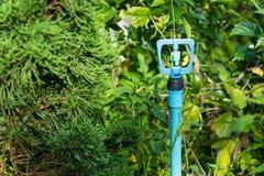 Vattenspridare i trädgården för att bevattna växter Arkivbild