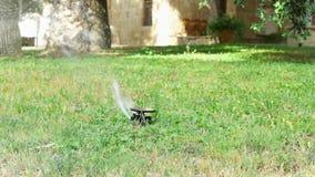 Vattenspridare på grön gräsmatta Automatiskt bevattna system som bevattnar utomhus- gräsmatta för grönt gräs stock video
