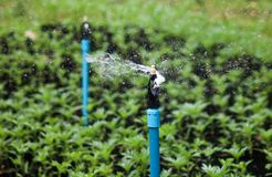 Vattenspridare som kör till att bevattna växter arkivbild
