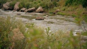 Vattenspring vaggar i liten vikflodström stock video