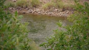 Vattenspring vaggar i liten vikflodström arkivfilmer