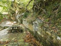 Vattenspringbrunn i skogen i vår royaltyfria foton
