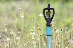 Vattenspringer Royaltyfria Foton