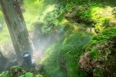 Vattenspringersprej som skapar dimmaeffekt i en trädgård fotografering för bildbyråer