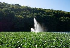 Vattensprinkleranläggning i morgonsolen på en koloni arkivbilder