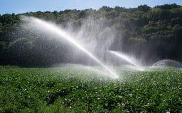 Vattensprinkleranläggning i morgonsolen på en koloni royaltyfri fotografi