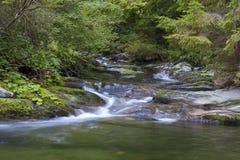 Vattenström i skog arkivfoton