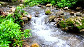 Vattenström i skogen stock video
