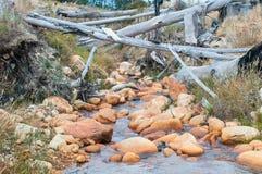Vattenström nära Sir Lowrys Pass Fotografering för Bildbyråer