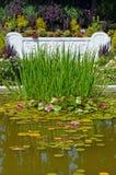 Vattenträdgård Royaltyfria Foton
