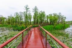 Vattenväxt på en våtmark royaltyfri fotografi